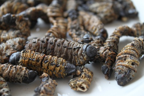 The Mopani Worm - picture from The Culinary Linguist